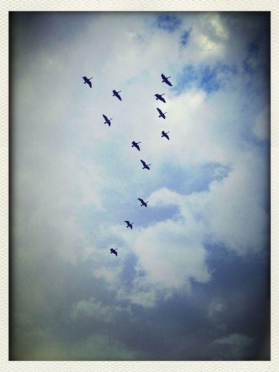 BirdSilhouette CloudsCloudsClouds