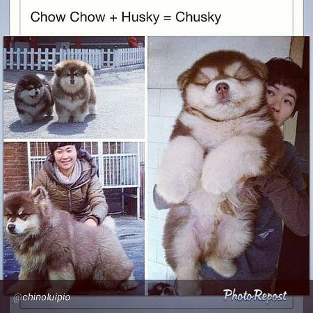 Wow.. Doggy Cute Astig