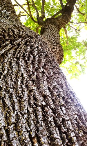 Beautiful Tree Nature Angles Perspective Enjoying Life Life Spirit