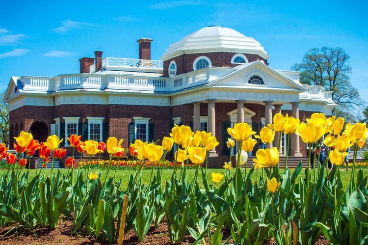 Colorful garden flowers in front of iconic Monticello, Thomas Jefferson 's home American History Colorful Columns Declaration Of Independence Exterior Flowers Founding Father Garden Grounds Historic Historic Building Inventor Memorial Monticello Outdoors Plantation Spring Spring Flowers Springtime Thomas Jefferson Tulips Unesco Virginia World Heritage Yellow Tulips