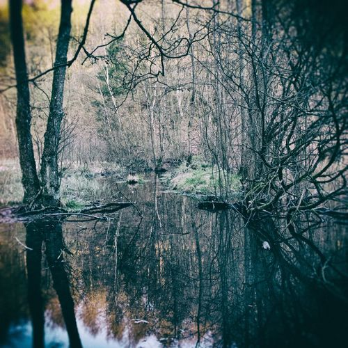 Dreamy Reflections Beauty In Nature Film Simulation Nature No People Non-urban Scene Outdoors Pond Season  Trees Vintage Look