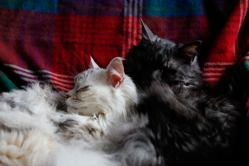 Close-Up Of Sleeping Cats