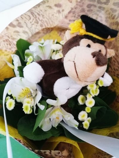 Stuffed Toy Indoors  No People Flower Freshness Close-up Day Memories Memorable Moment Memorable Final Class Final Count Down Celebration Celebration Event Diplom Graduation Graduation Ceremony Fragility Boquet Bunch Of Flowers Monkey Plush Toy