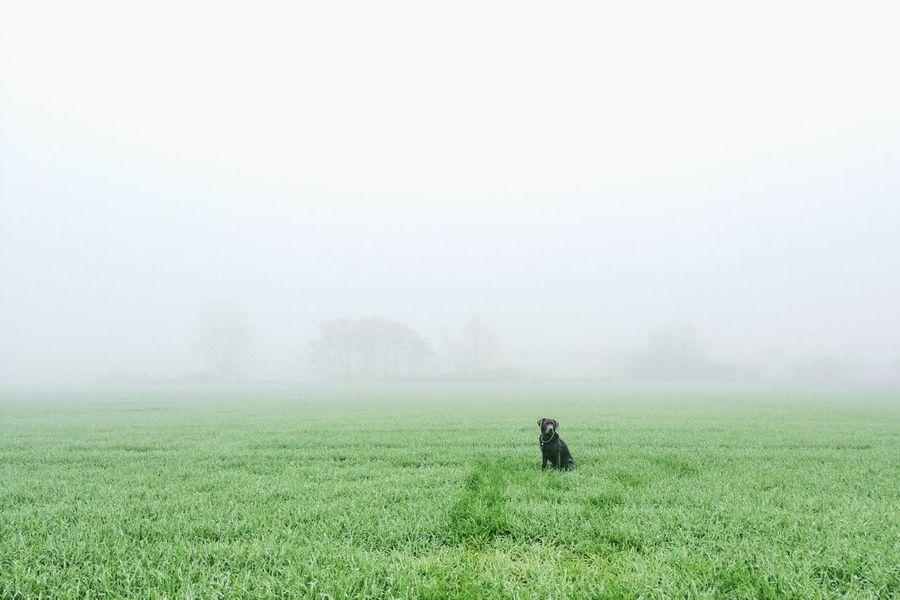 Dog Dogs Doglife Fog Foggy Nature Labrador Roamingfrieda Findfrieda Labrador Retriever Cute Dog  Outofnowhere Dogsearchpicture Ghostdog Magic