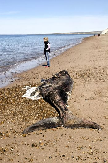 Woman standing on sand by dead whale at beach