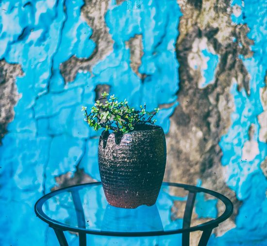 Potted Plant On Table Against Damaged Wall