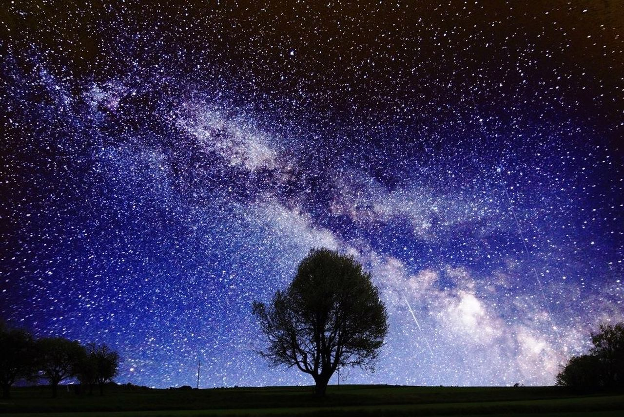 night, star - space, tree, sky, plant, beauty in nature, astronomy, space, scenics - nature, tranquil scene, tranquility, galaxy, star, no people, nature, environment, field, landscape, land, star field, outdoors, milky way