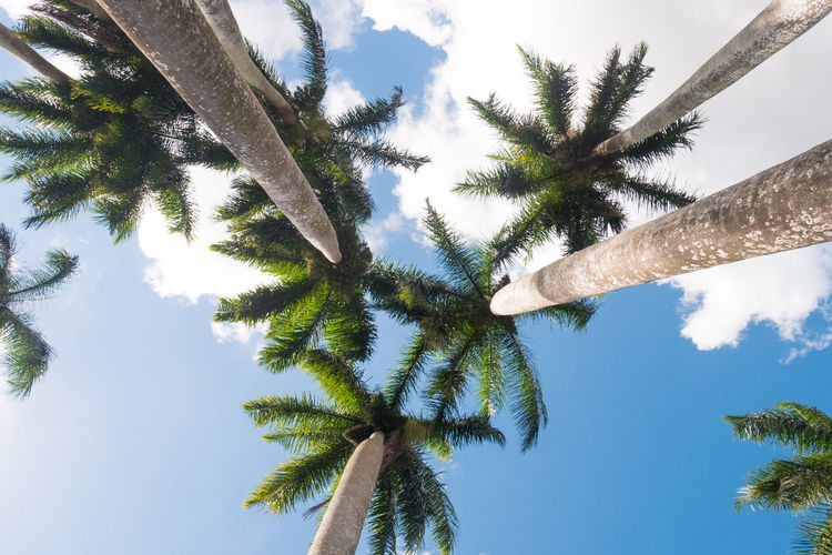 Cuba Beauty In Nature Branch Carribean Day Growth Low Angle View Nature No People Outdoors Palm Tree Scenics Sky Tree Tree Trunk