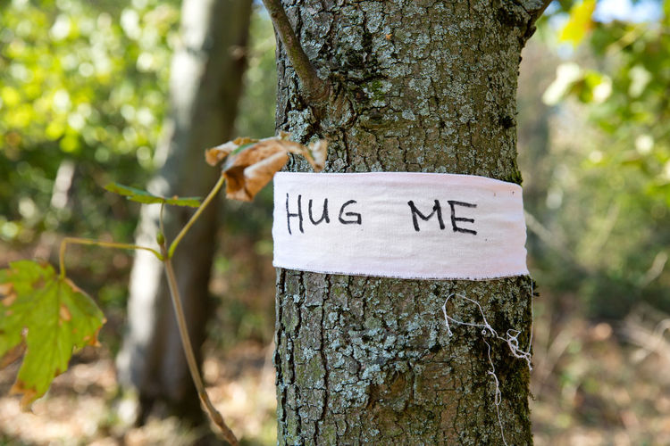Trunk Tree Trunk Tree Plant Focus On Foreground Text Nature Communication Day Western Script Close-up Forest Outdoors Growth No People Emotion Plant Bark Sign Wooden Post Message Hugging A Tree Hug Invitation Request Love