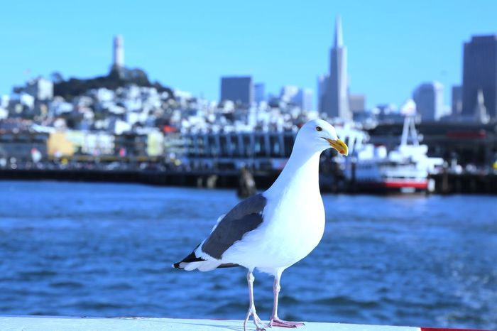 San Francisco Canon5dmarkiii Outdoors Perspectives Seagull Landscape Cruise Macphun Nature Check This Out