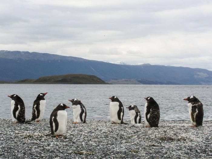 Penguins Against River