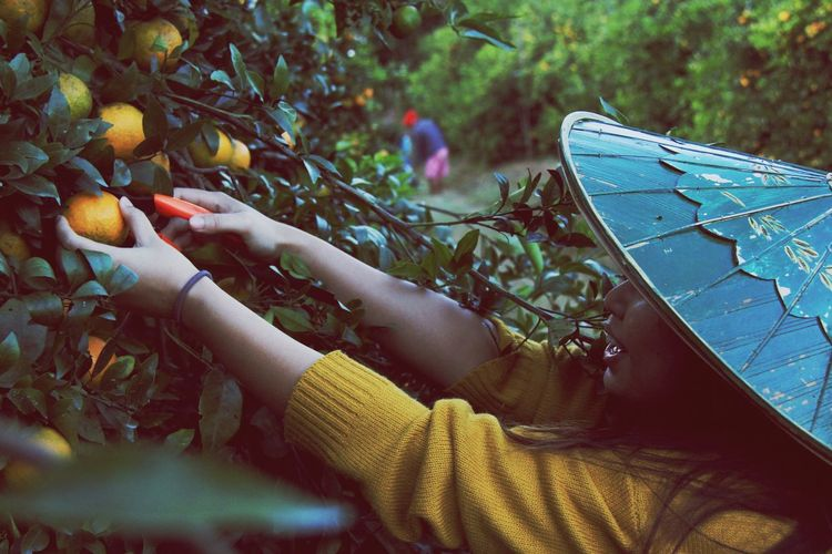Close-Up Of Woman Picking Fruits On Tree