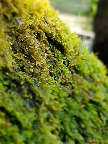 fern Nature Green Color Close-up Beauty In Nature No People Day Growth Outdoors Fragility Freshness Moss Animal Themes