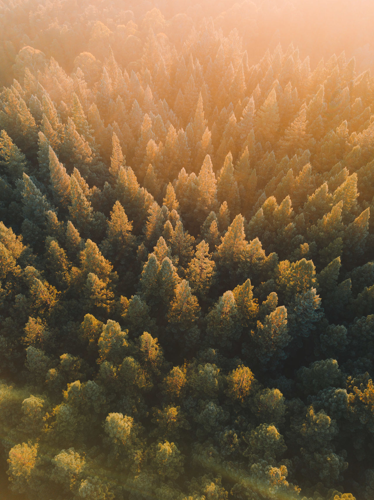 High angle view of trees in forest