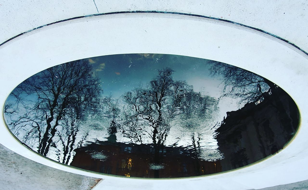 REFLECTION OF TREES ON GLASS
