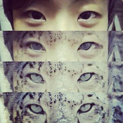 Bars eyes