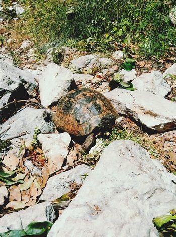Turtle 🐢 Olimpos, Kemer Turkey