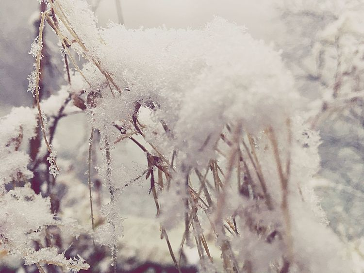 Winter Nature Snow Outdoors Beauty In Nature Schnee Cold Temperature Schnee *-* Erster Schnee ❄️