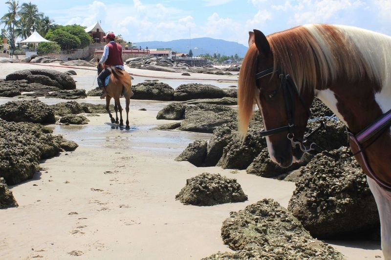 Horses on land against sky