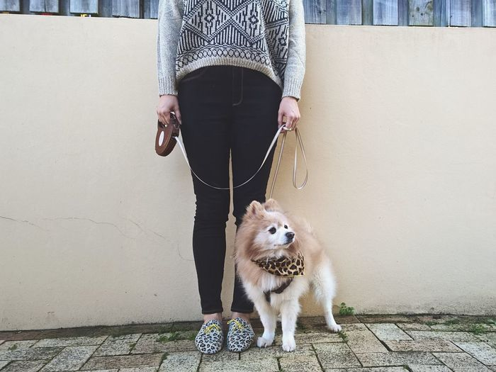 Low Section Of Woman With Dog Standing By Wall