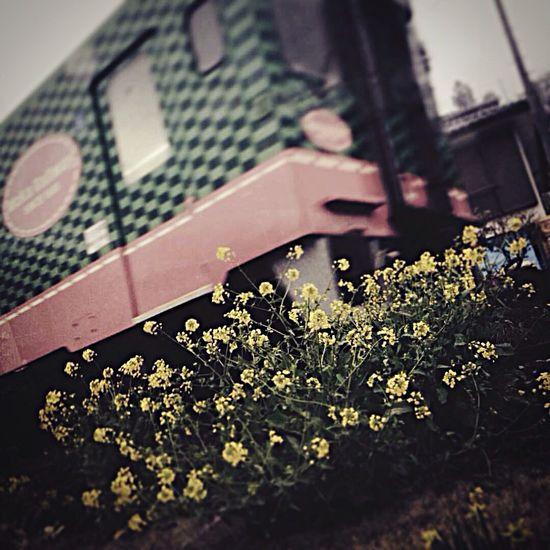 Train Frowers Motegi Gleen Yellow Red 電車 茂木 花 EyeEm Gallery