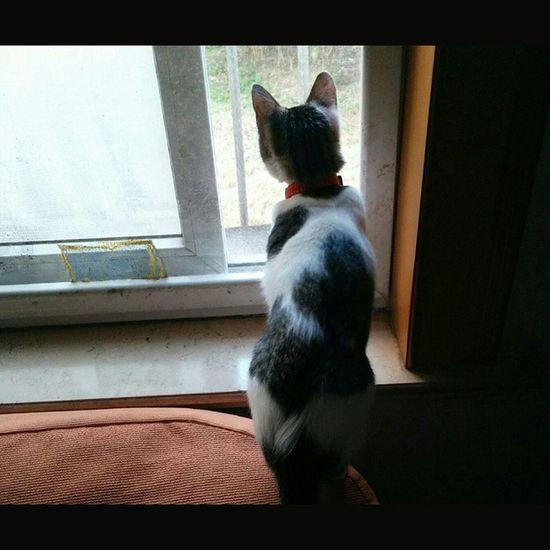 Squareinstapic Catseries YesTopman Cat Juenextgen2015 Watchman Shanghai Pet Memories