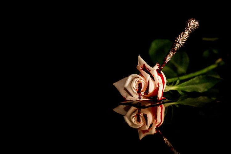 Crime No Flash Omicide Reflection Sangria Assassination Beauty In Nature Blood Blut Close-up Flower Fragility Leaf No People Petal Reflections Riflesso Rosa Rose - Flower Sang Sangue Splatter Still Life Studio Shot First Eyeem Photo