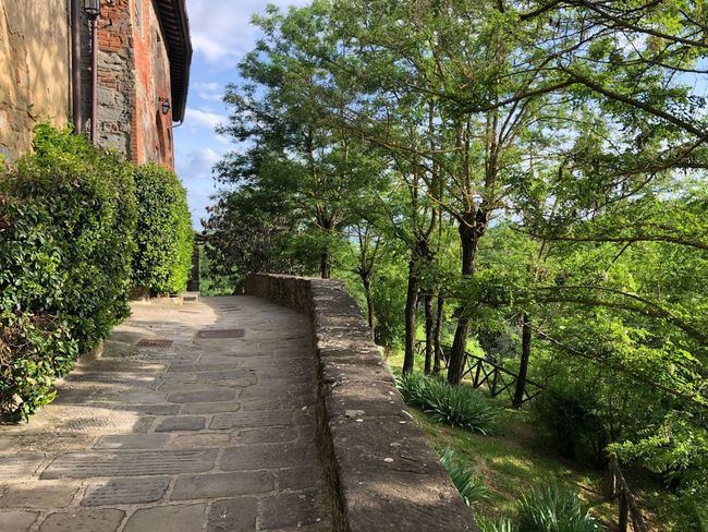 Ferragamo Il Borro Plant Tree The Way Forward Growth Nature Direction Day Architecture Sunlight Built Structure Diminishing Perspective Tranquility Beauty In Nature Shadow Outdoors Footpath Narrow No People Sky Green Color