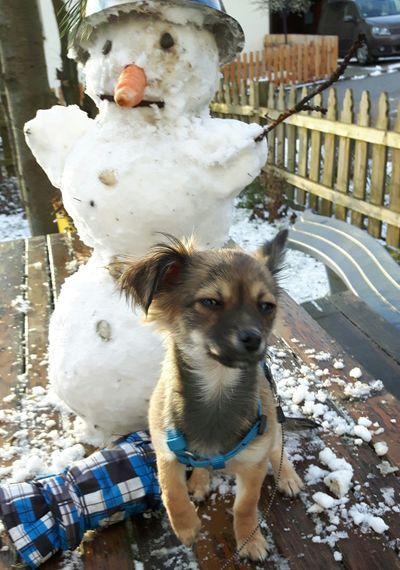 Wist ihr eigentlich, das es kalt ist. One Animal Animal Themes Mammal Dog Pets Snow Dogs Of EyeEm Dog Photography Dogs Hundewelpe Food Hundewelpen Foodphotography Winter Schneemann