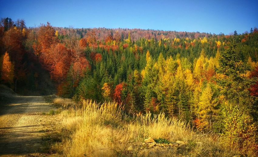 Beskidżywiecki Žywiec Autumn Colors Capture The Moment Lgg3shot LGg3photography LGG3