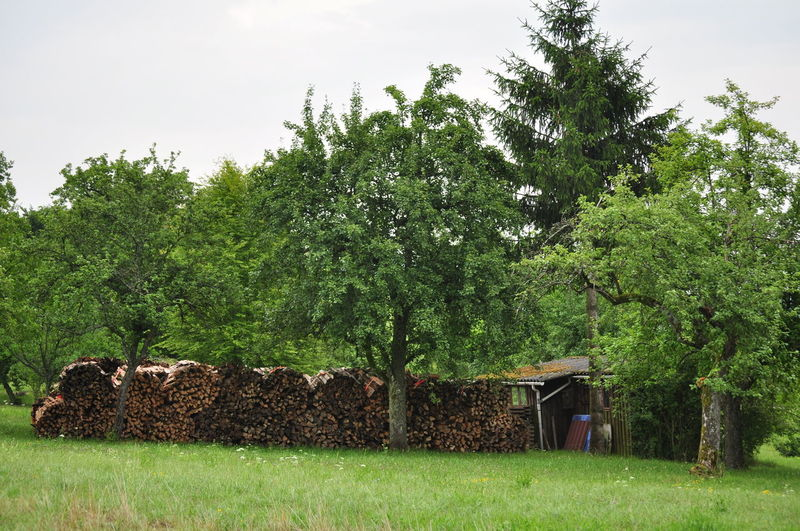 Agriculture Big Stack Energy Fire Wood Firewood Fruit Trees Fuelwood Garden Cabi Garden Shack No People Orchard Outdoors Stacked Stovewood Tree