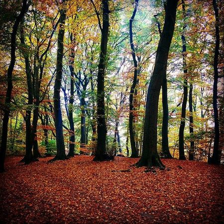 Worpswede Herbst Wald