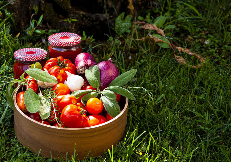 Close-up of fresh fruits in field