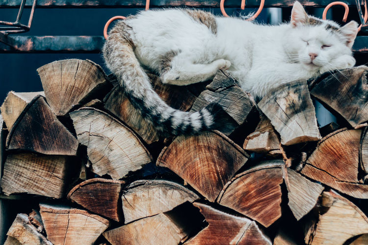 Close-Up Of Cat Resting On Wooden Log
