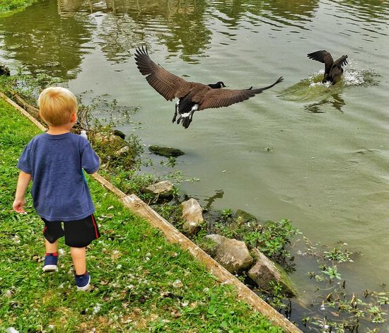 Rear View Full Length Water Childhood One Person Animal Themes One Animal Walking Lake Outdoors Day Child Real People Bird Children Only Boys Standing Mammal Domestic Animals Nature