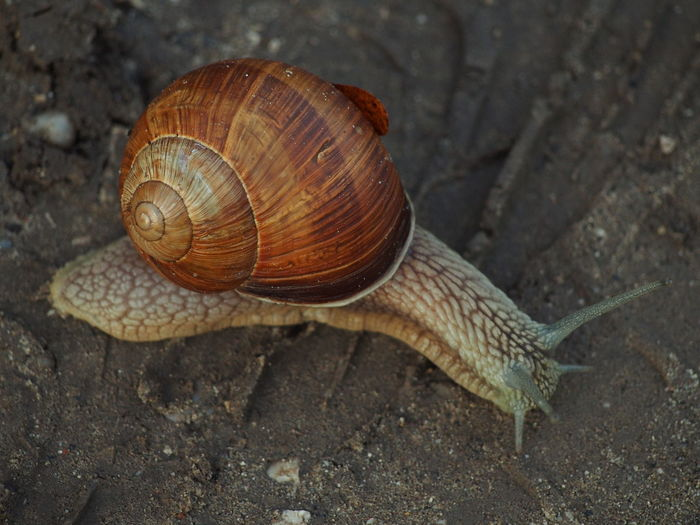 Close-up of snail on sand