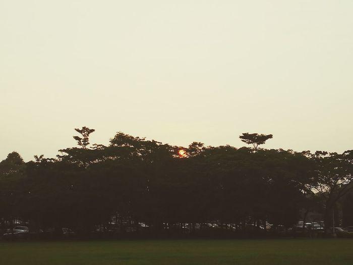 Good morning Sunset
