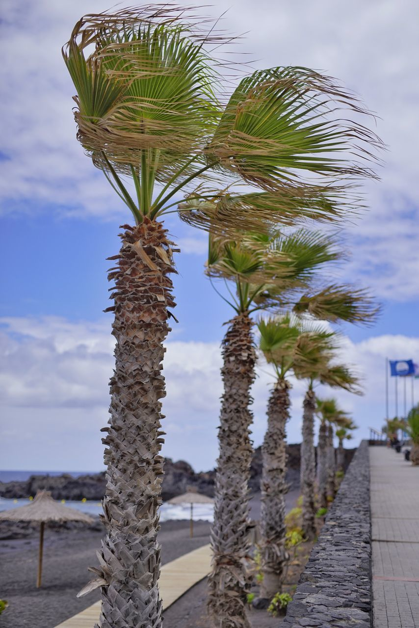 sky, palm tree, outdoors, cloud - sky, day, nature, no people, growth, beauty in nature, tree, close-up