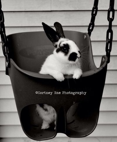 Edgar. Blackandwhite Photography Cortney Rae Photography Edgar The Bunny
