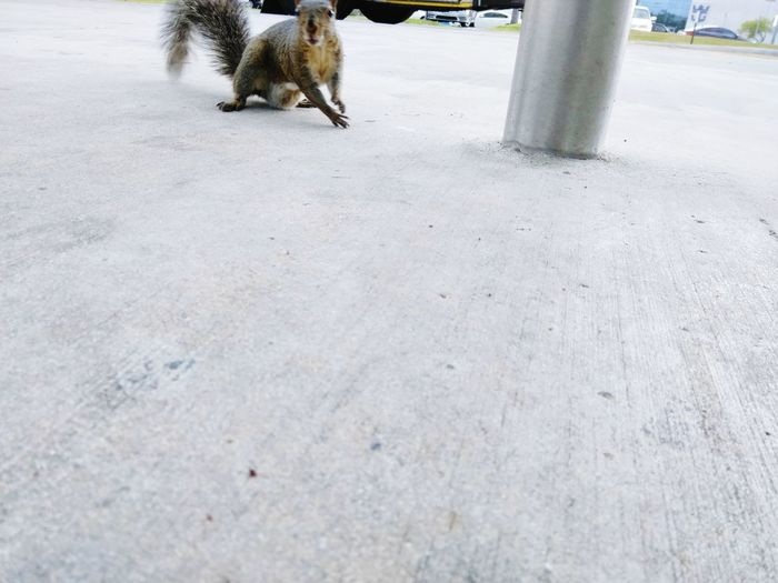 Squirrel Nature