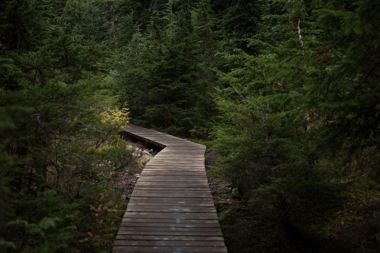 Wooden jetty on footbridge in forest
