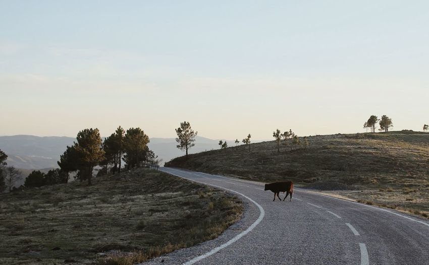 View of people riding horse on road against sky