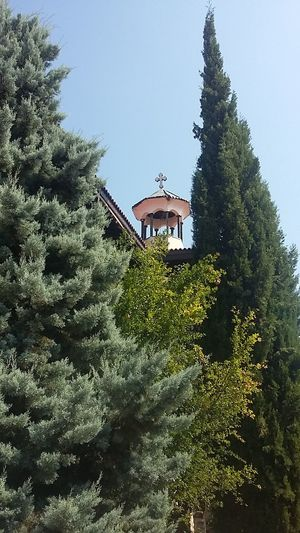 Tree Architecture Built Structure Building Exterior Growth Clear Sky Low Angle View Green Color Plant Day Nature Lush Foliage Outdoors Sky Green No People Scenics Beauty In Nature Tranquility High Section The Color Of School Рожен манастир Rojen Monastery