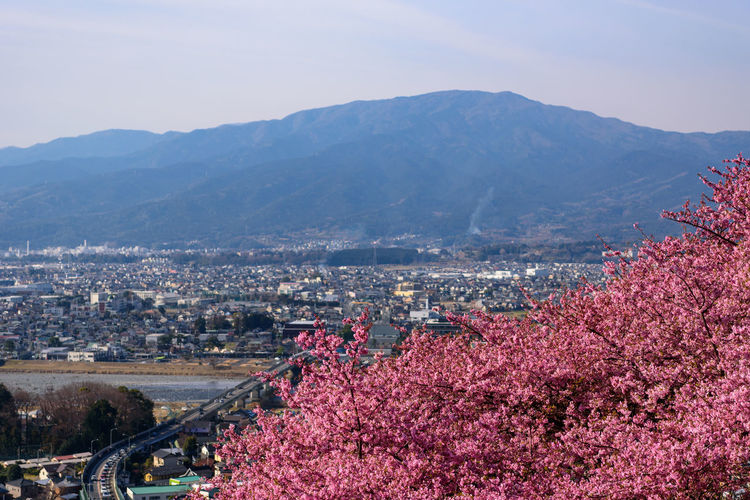 Architecture Mountain Built Structure City Building Exterior Plant Nature Sky Tree Beauty In Nature Building Cityscape High Angle View Flower Flowering Plant No People Day Growth Residential District Mountain Range Outdoors Springtime Cherry Blossom Kawazu-zakura
