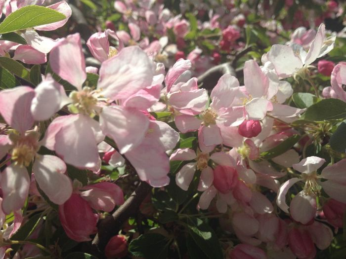 Apple blossom time Growing Our Own
