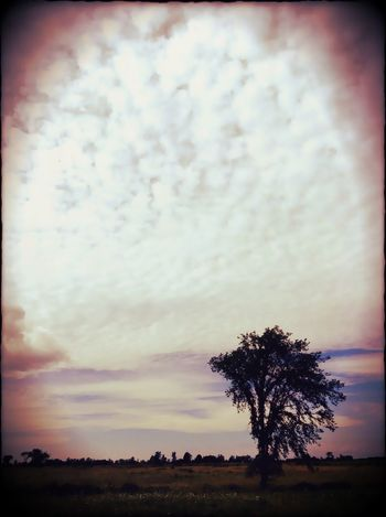 For The Love Of Trees ~ Spirit Of The Tree Sunset 25 Days Of Summer