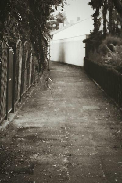 Walking Around Streetphotography Light And Shadow EyeEm Bnw Urban Nature Monochrome Plants 🌱 Road Blackandwhite