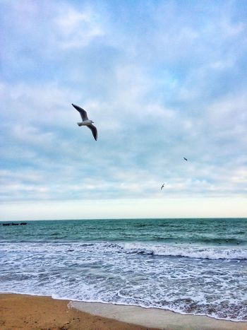 Nirvana Sand Seagull Seagulls Sea Horizon Over Water Flying Bird Water Sky Nature Beauty In Nature Beach Scenics Cloud - Sky Tranquil Scene Mid-air Tranquility Animals In The Wild Animal Themes One Animal Spread Wings Outdoors Day