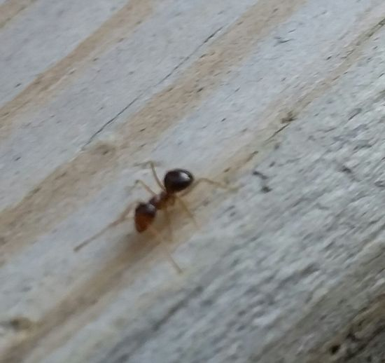 Ant Life Small Ant Micro Nature
