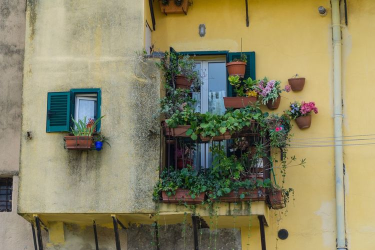 Perugia, Italy Perugia Building Exterior Built Structure Architecture Plant Building Potted Plant Window Day No People Outdoors Hanging Residential District Window Box Wall - Building Feature Growth Flowering Plant Flower Nature Decoration Flower Pot